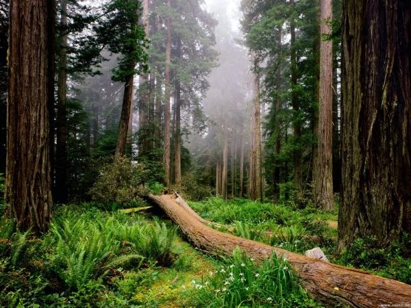 Le foreste contribuiscono a sicurezza alimentare del pianeta