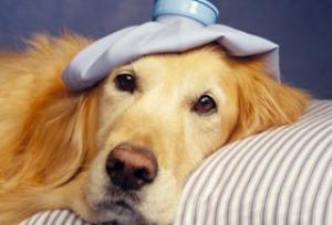 Cani di razza, è possibile sapere di quale patologia si ammaleranno